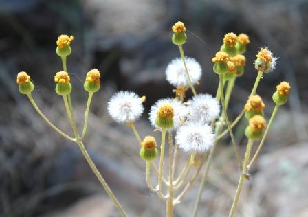07-18 Flowers