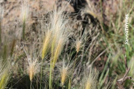 01-23 Weeds