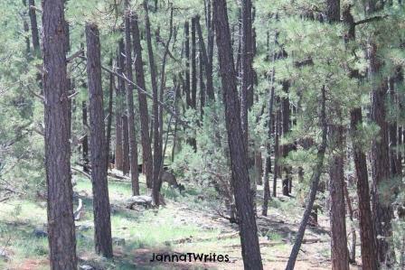 02-18 Pines_Elk