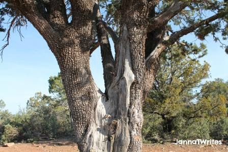 04-12 Tree