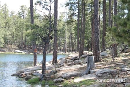 05-20 Trees Lake