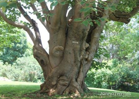 Perfect reading tree (in my opinion!)