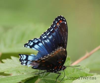 07-31 Butterfly
