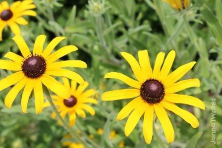 2013 06-11 Flower2