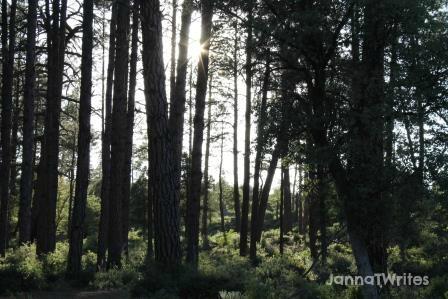 08-14 Sulight through trees