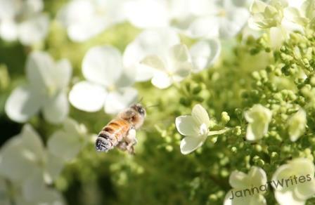 08-21 Bee_Flower