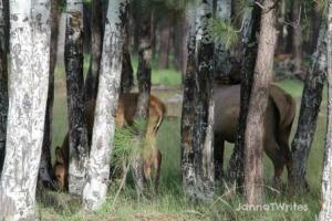 08-28 Elk Group
