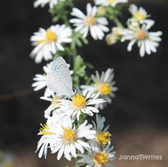 10-9 Flowers