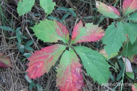 10-9 Leaves