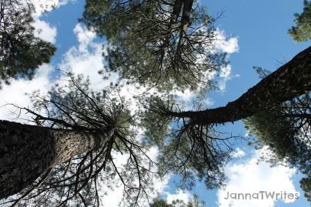 12-10 Trees