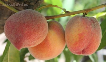 2012 05-19 Peach Festival28
