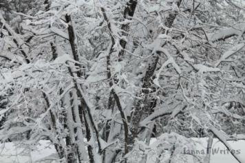 04-14 Snow