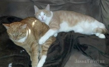 Sammy and Lizzy (sons' cats)