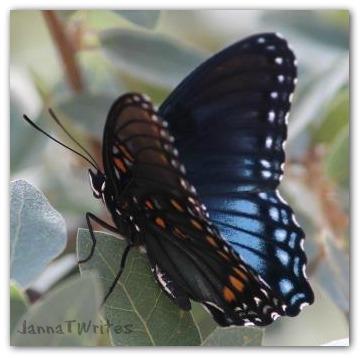 04-21 Butterfly