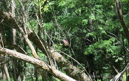 06-26 Tree