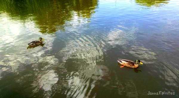 09-15 Ducks