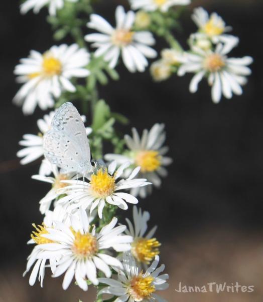 09-21 Flower Butterfly