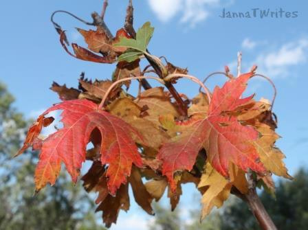 10-27 Leaves