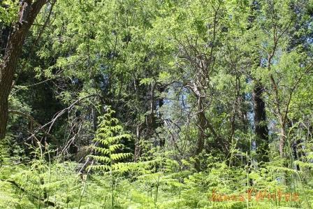 10-3 trees