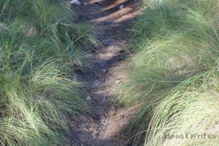 10-9 Grass