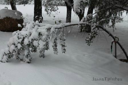 01-12 Snow