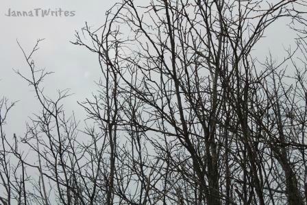 01-15 Rim trees6