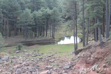 03-30 Woods Canyon Lake1