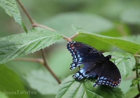 04-13 Butterfly