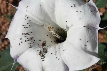 01-21 Flower